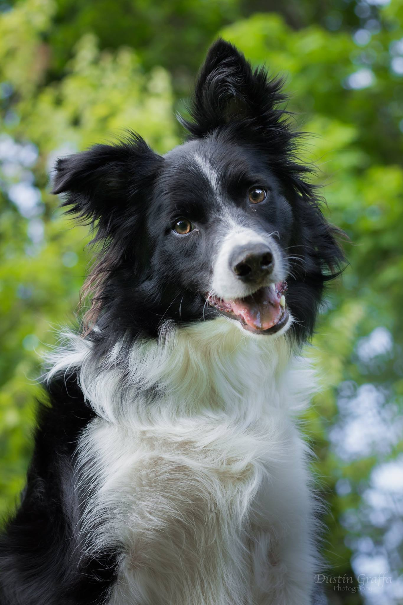 how to become a certified dog trainer in pennsylvania